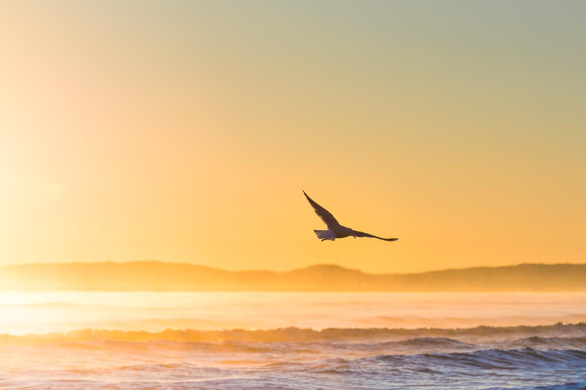 bird flying at sunset inspirational quotes for sunset pictures