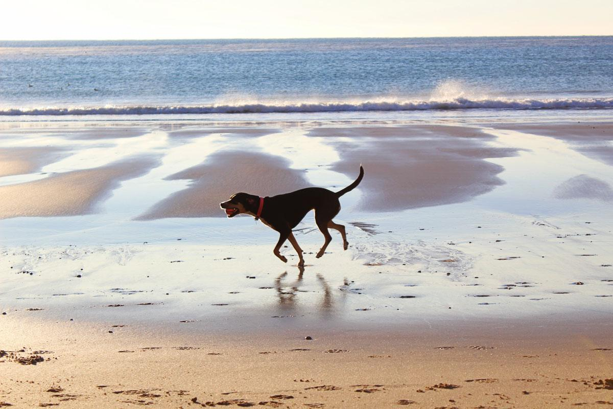 dog running on the beach quotes short beach quotes and sayings