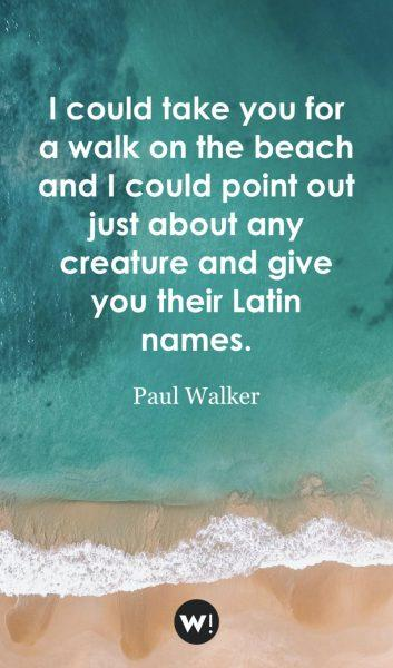I could take you for a walk on the beach and I could point out just about any creature and give you their Latin names