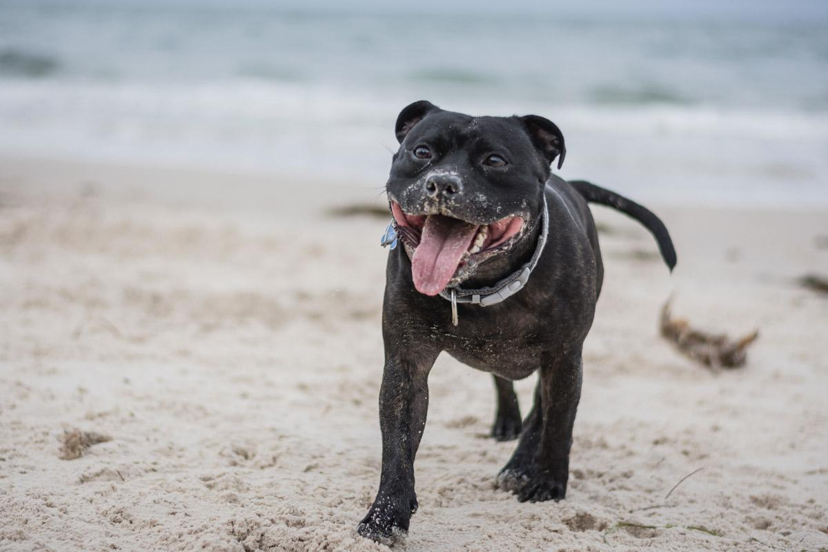 smiling dog on the beach happiness at the beach quotes